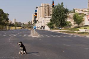 Leere Straßen an Jon Kippur, Autofahren ist verboten. Toni fand es gut.